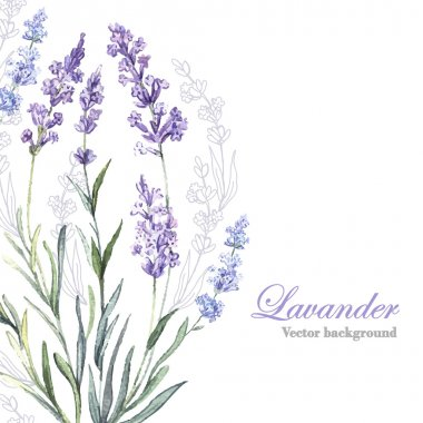 Watercolor Lavender background