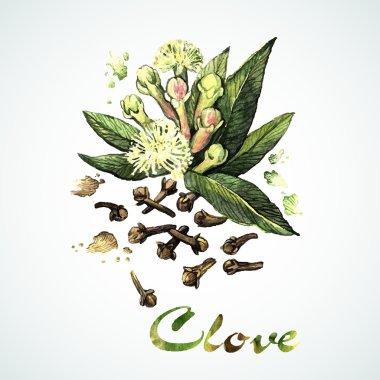 Watercolor Clove card