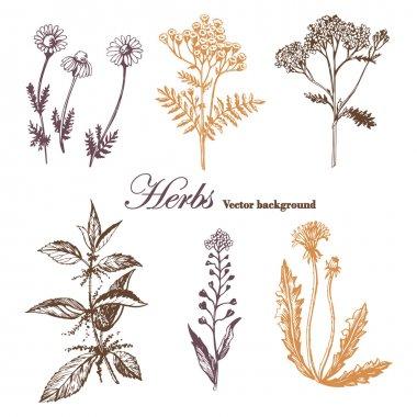 Set of medicinal herbs.