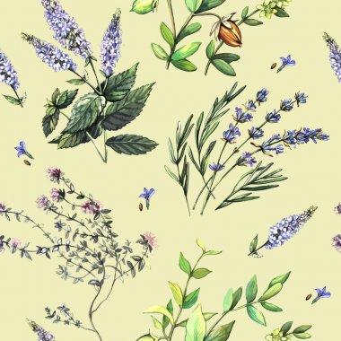 Watercolor medicinal plants