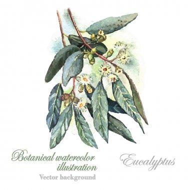 Watercolor Eucalyptus plant