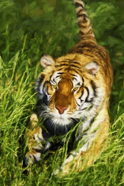 Impressionist art of Bengal Tiger (Panthera tigris tigris) charging through the grass
