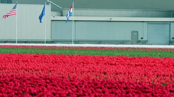 Vlajky Spojených států amerických, Evropské unie a vlajka Nizozemska v