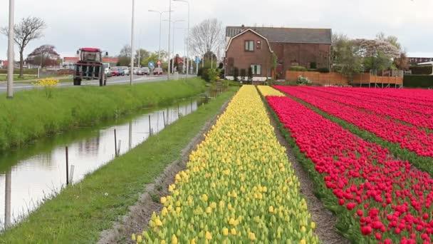 Zavlažování a odvodňovací kanál vedle kvetoucích holandské Bulbfields
