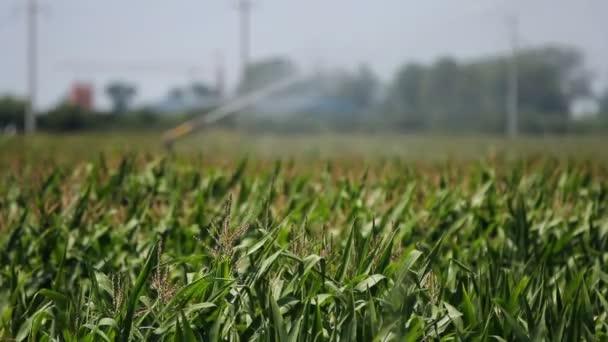 Zemědělské postřikovače postřik kukuřičné pole
