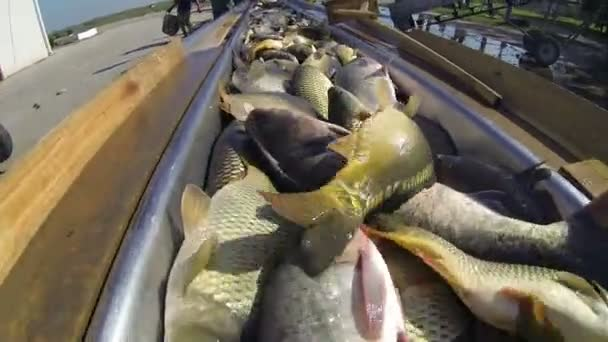 Fresh fish for market