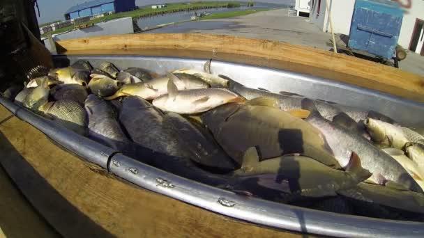 Čerstvé ryby na trh