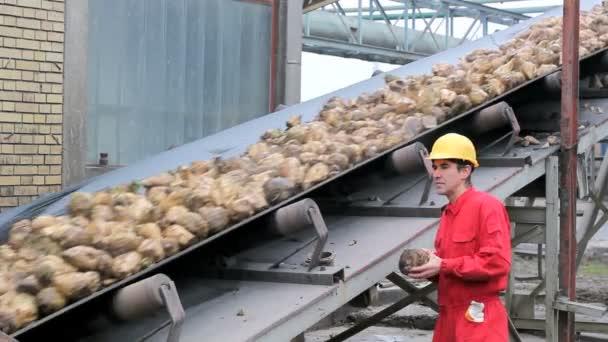 Dělník při pohledu na cukrové řepy