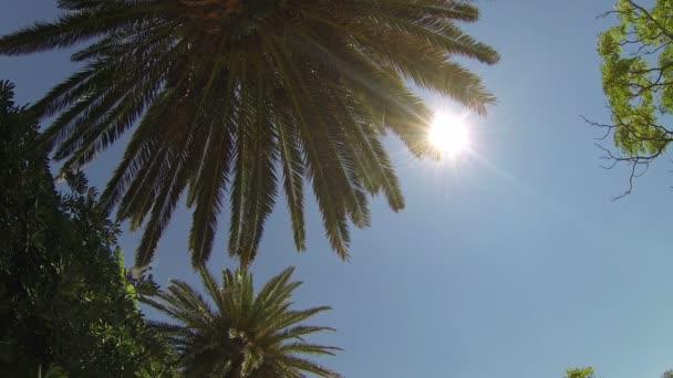 Palma proti slunci