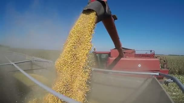 Combine Harvesting Corn and Unloading Grains into Tractor Trailer