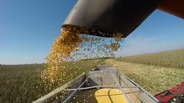 Unload sklizně kukuřice na návěs