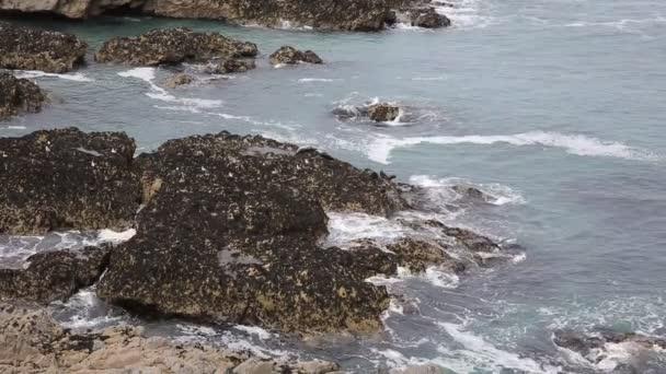 Těsnění, spočívající na skalách pobřeží z Cornwallu The Kelseys poblíž Holywell Bay na jižní cestě západní pobřeží