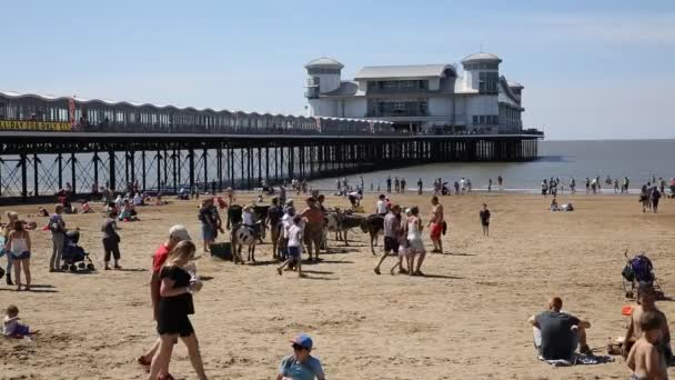 Donkies on Weston-super-Mare beach with Grand Pier Somerset