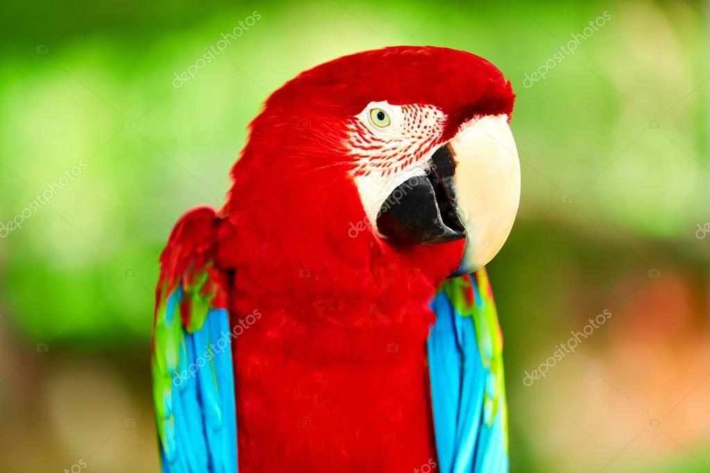 Birds, Animals. Red Scarlet Macaw Parrot. Travel, Tourism. Thail