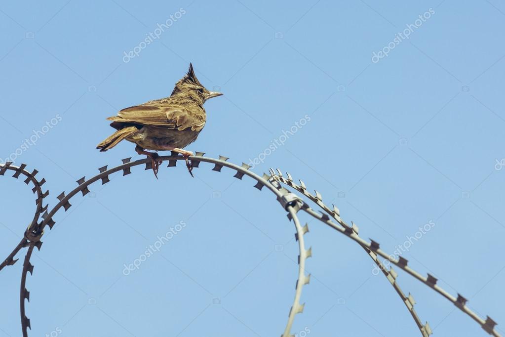 Lark Barbed Wire - WIRING CENTER •