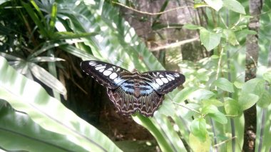 view of the beautiful butterfly is sitting on leaves in greenhouses
