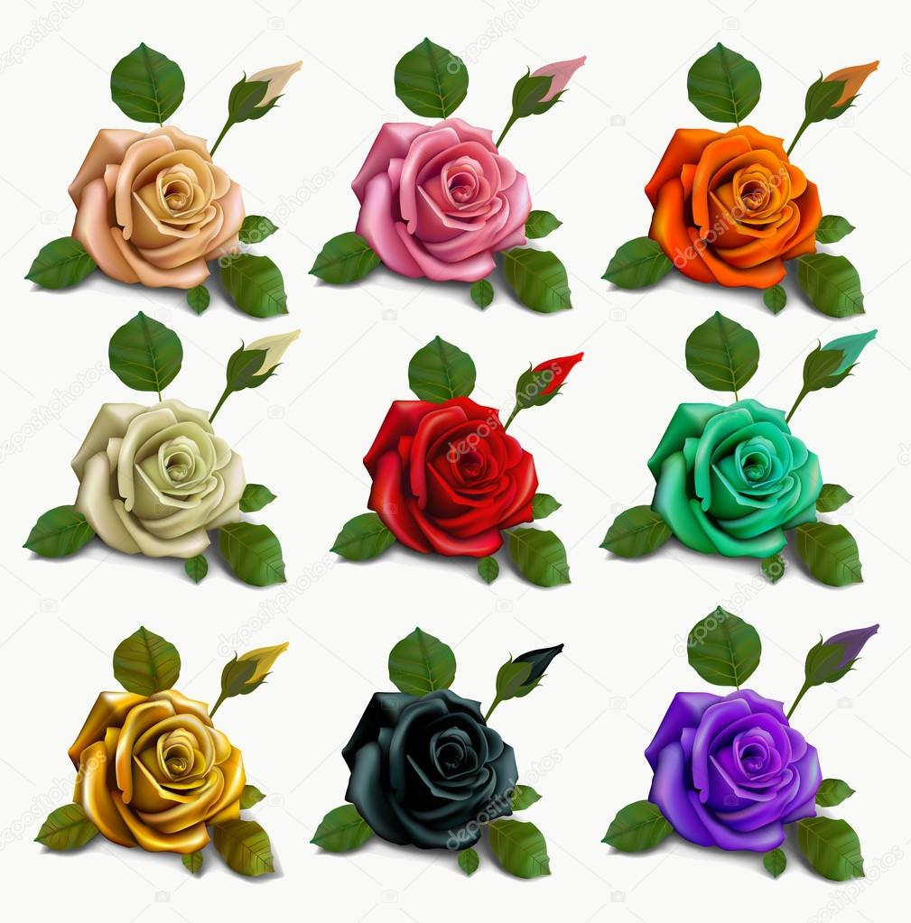 set diferent flowers roses. red black white gold pink beige azure celadon orange Violet .