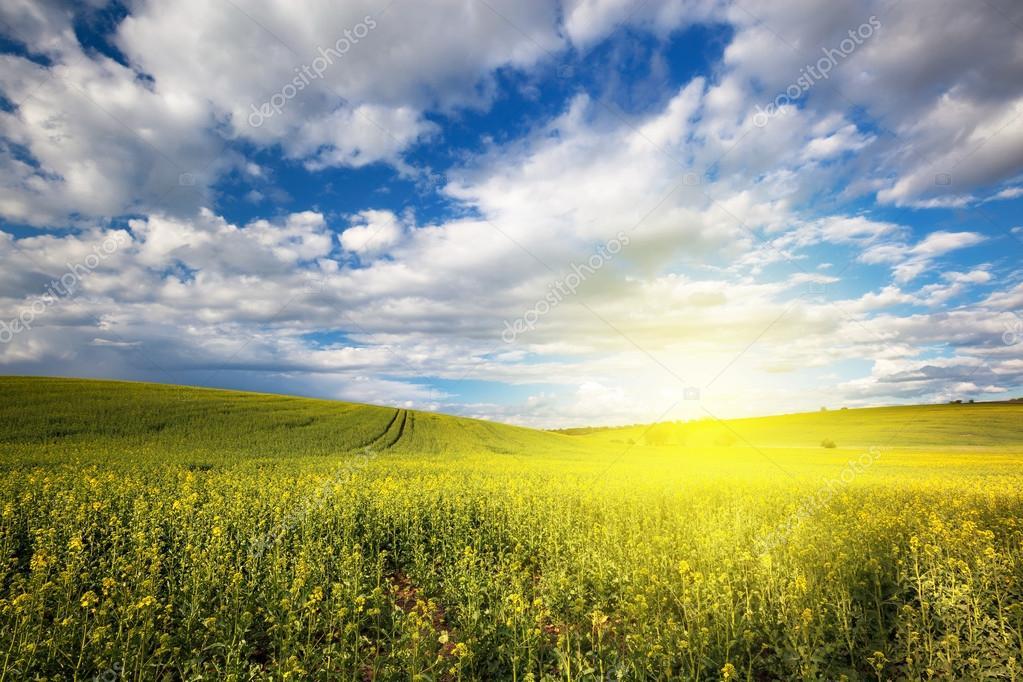 Paisaje soleado hermosa naturaleza foto de stock for Naturaleza hermosa