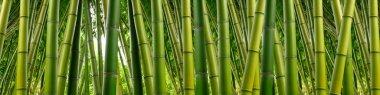 Bamboo Panoramic