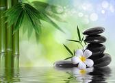 Wellness kameny s keře