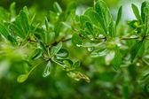 kapky vody po dešti na zelený list