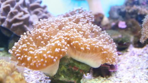 ryby a korály pod vodou