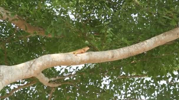 Červené ještěrky na stromě