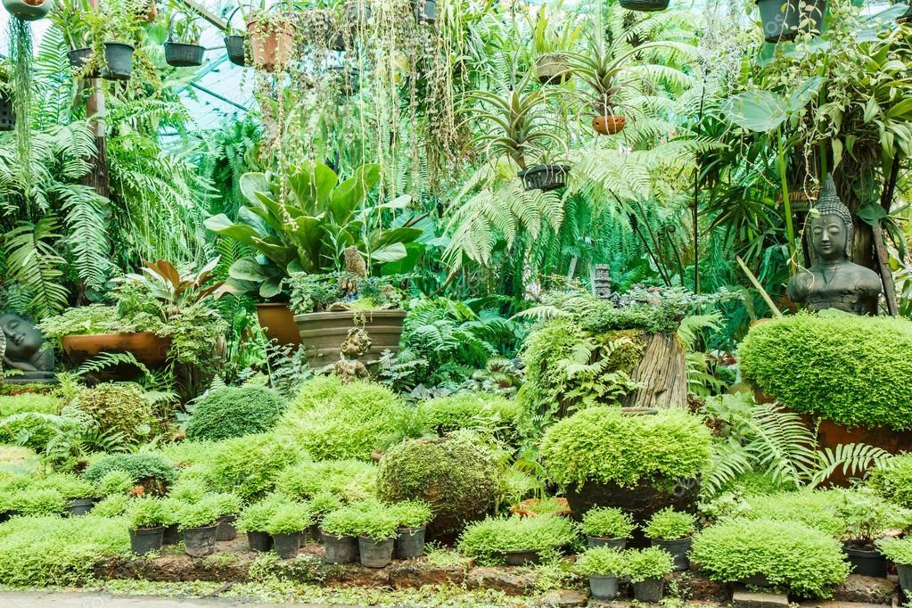 Töpfe Im Garten Mit Moos Stockfoto Photonewman 56117279