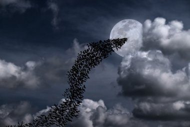 "Картина, постер, плакат, фотообои ""Летучие мыши и полная луна "", артикул 90660242"
