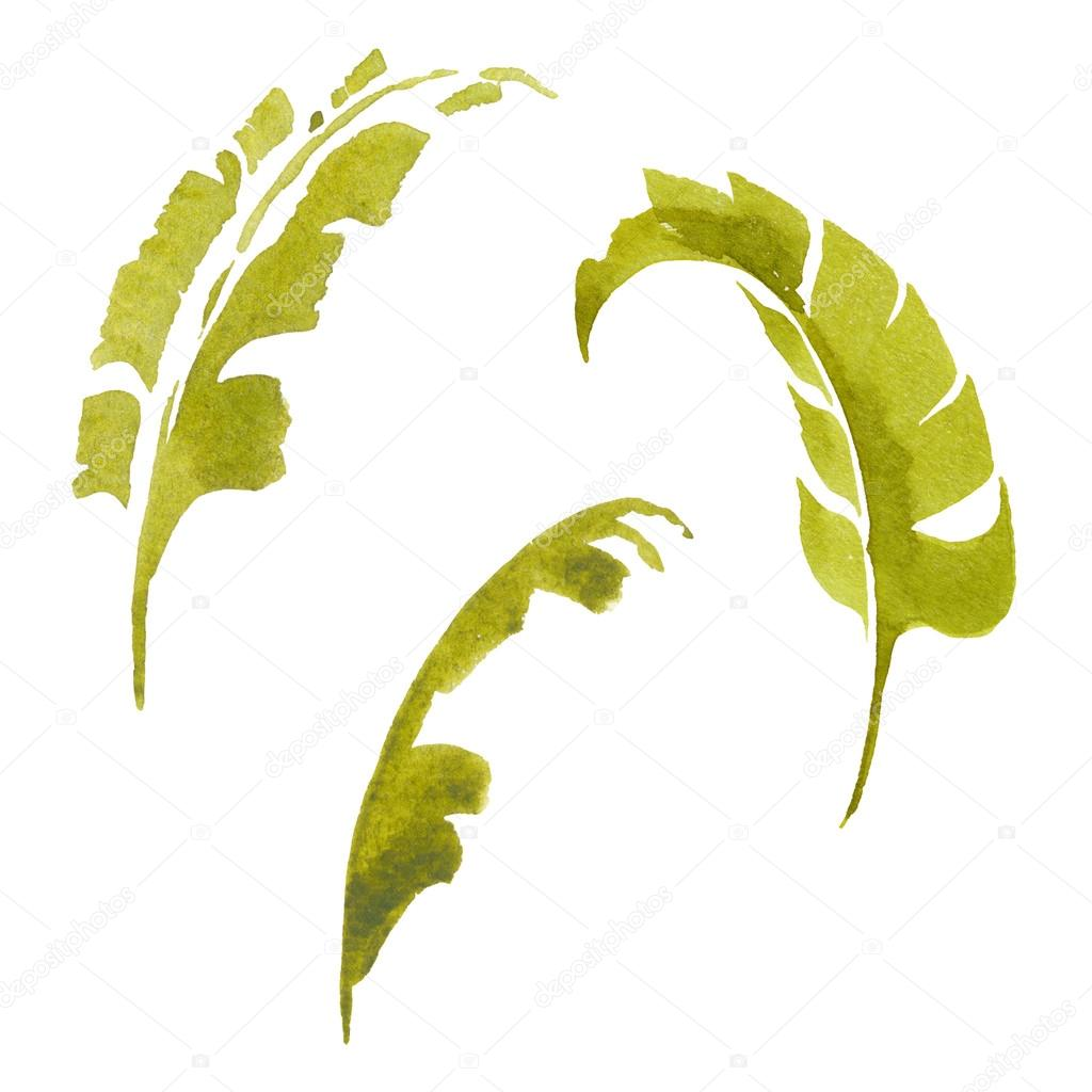Tropical set of palm leaves isolated on white background