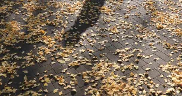 A shadow of the ginkgo street at the park in Tokyo at autumn