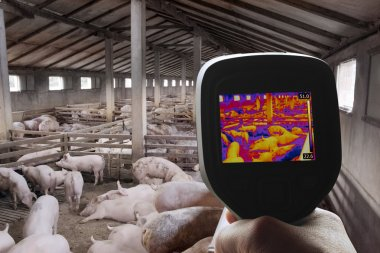 Thermal Image of Pig Farm
