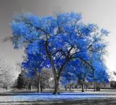 Velký modrý strom
