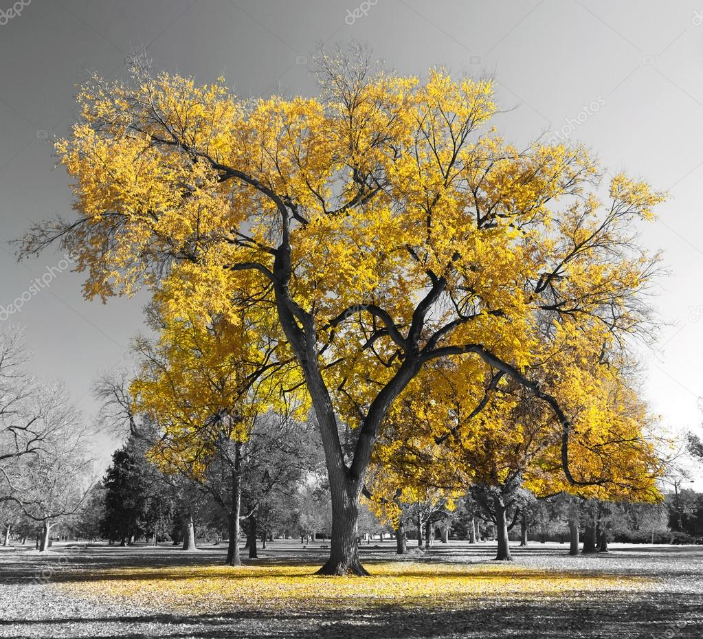 Big Golden Tree