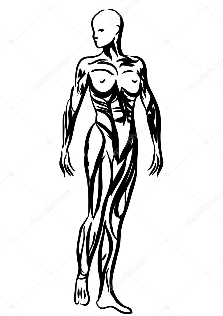 menschlichen Körper Anatomie Frau Abbildung — Stockvektor © arkela ...