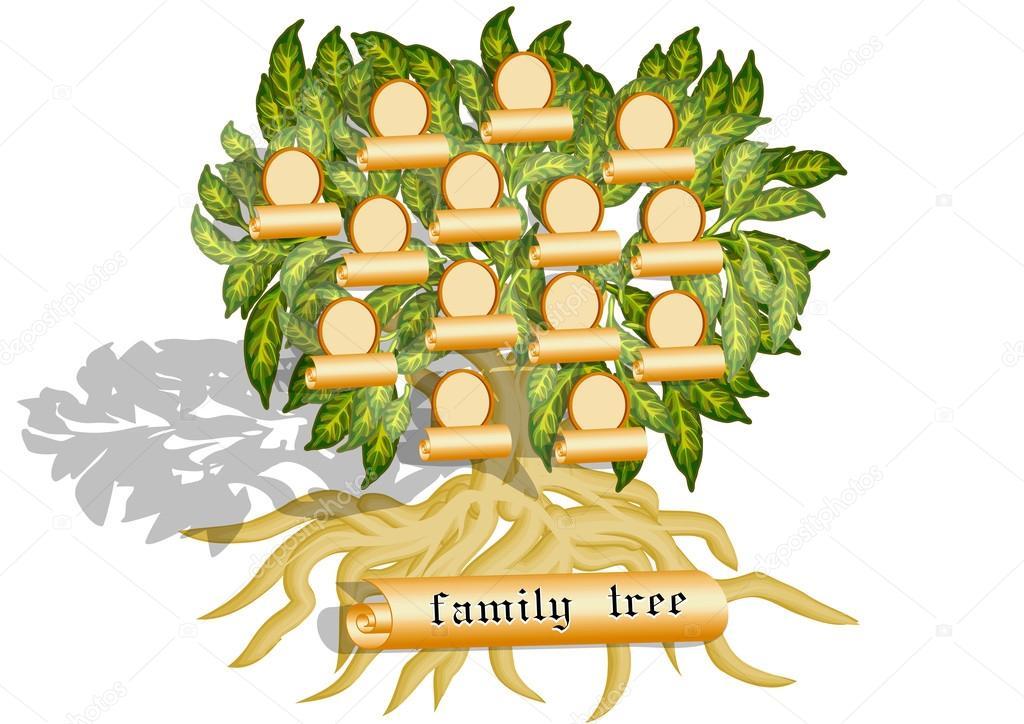 Imágenes Arbol Genealogico En Blanco árbol Genealógico En Blanco