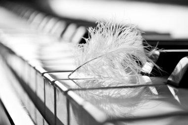 Feather closeup on piano keyboard