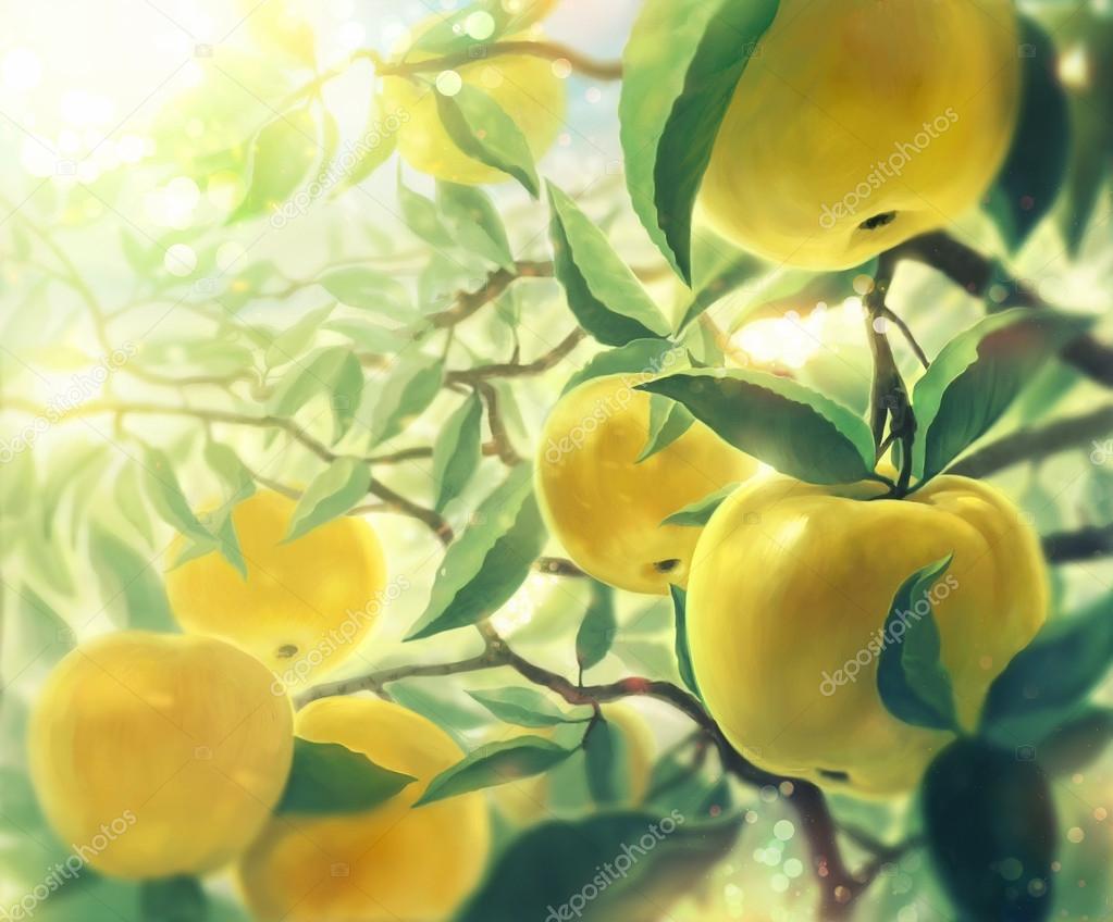 Branches of apple.  Ветки яблони.
