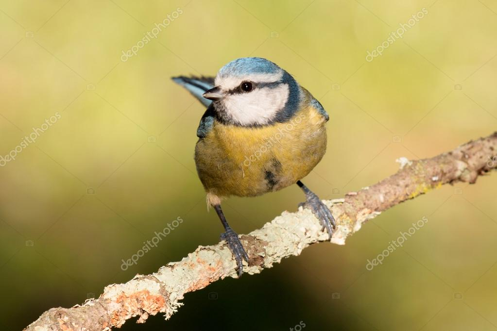 Nice tit picture