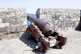 Fotografie old cannon protecting the fortress