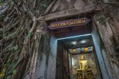 Fotografie banyan tree chrám