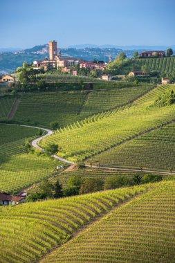 Panorama of Piedmont vineyards