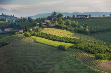 Beautiful Vineyards of Langhe