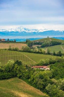 Vineyards of Langhe, Piedmont