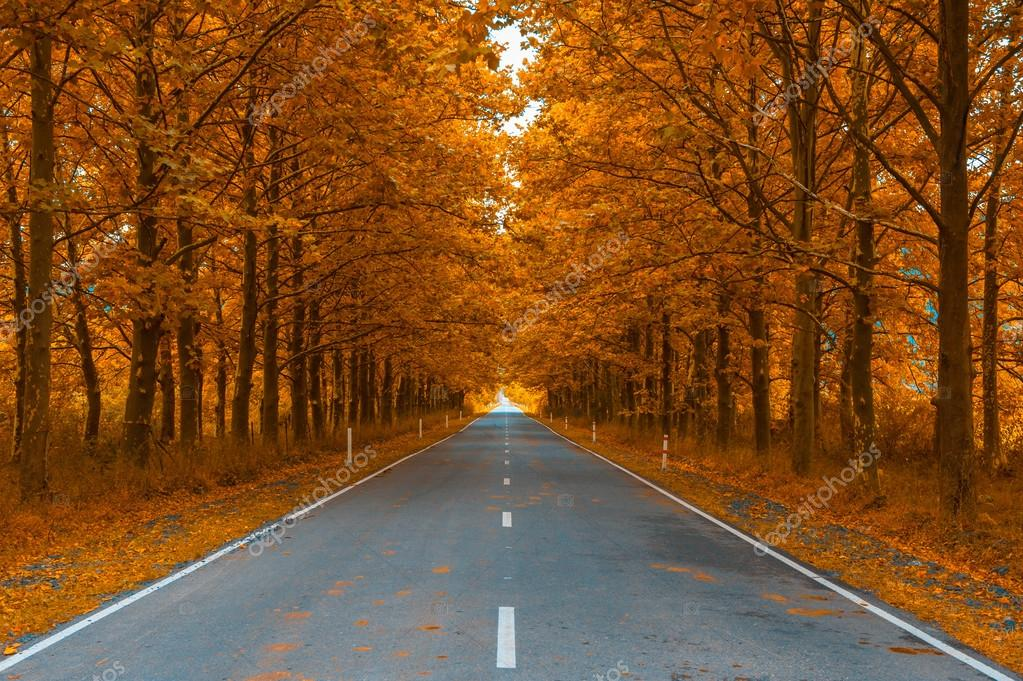 Road in autumn woods