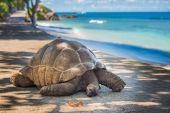 Fotografie Obří želva Seychely