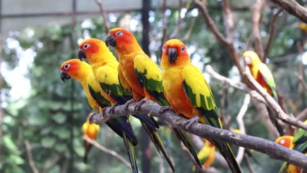 Sun Conure Papoušci Krásný papoušek na větvi stromu