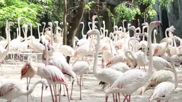 Flamingo madár a Dusit Zoo Bangkok Thaiföld.