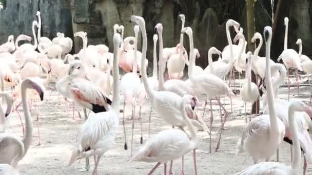 Flamingo-Vogel im Dusit Zoo Bangkok Thailand.