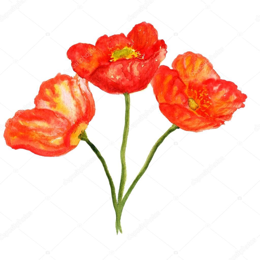 Poppy flower bouquet — Stock Photo © shoshina #89874094
